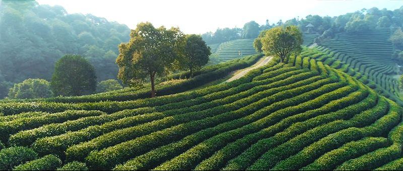 九龙洞生态农业
